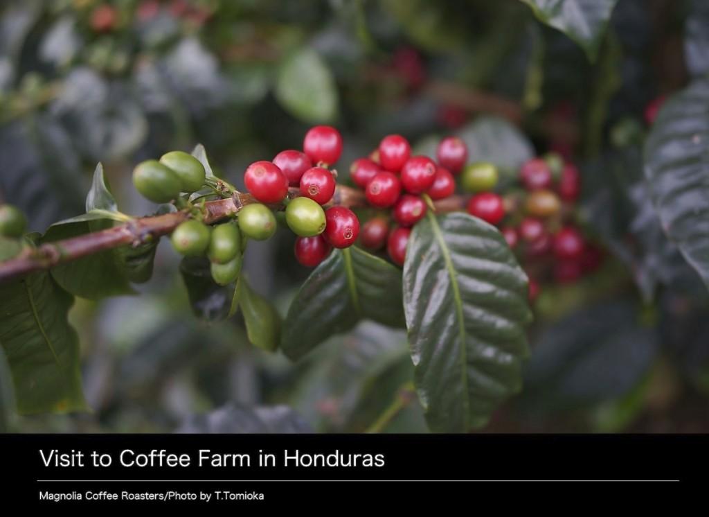 Book_Honduras_2014