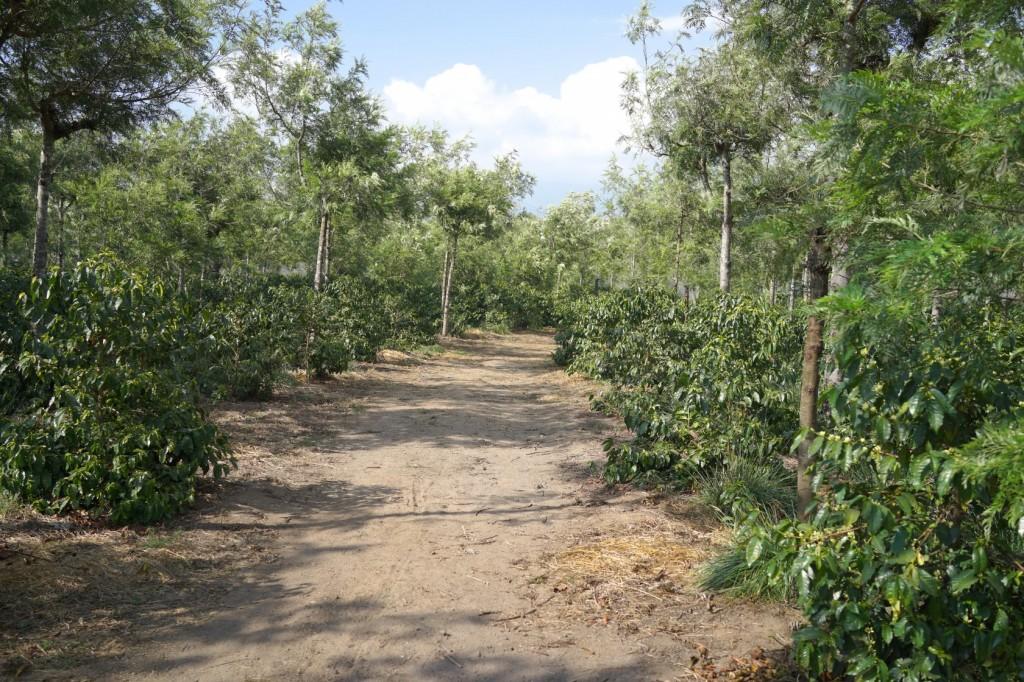 magnoliacoffee_guatemara 2014